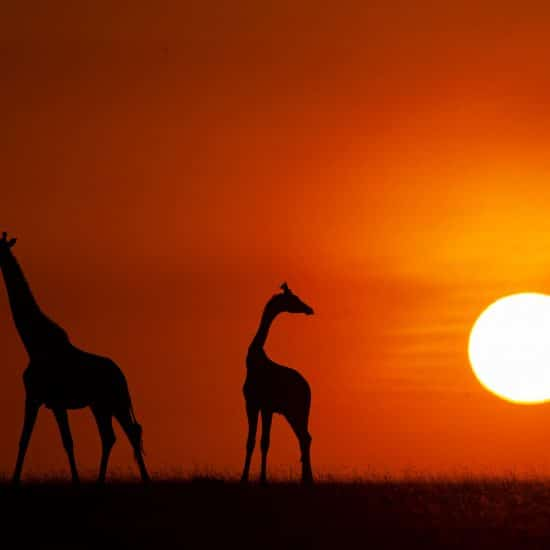 Tanzania Photo Safari Tours - Sunset