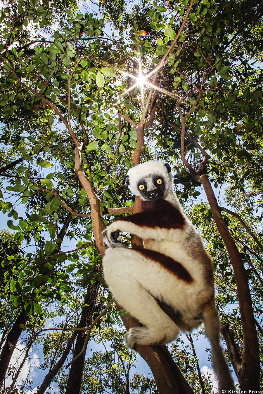 Madagascar Photography Tour
