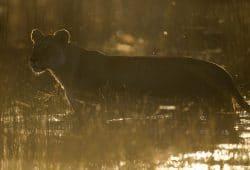 Botswana Luxury Photo Safari