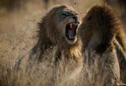Botswana Luxury Photographic Safari