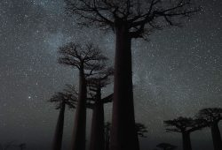 Baobab, Madagascar Photographic Tour