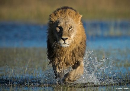 Botswana Photography Tours