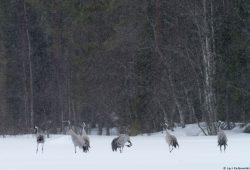 Finland Photo Safari