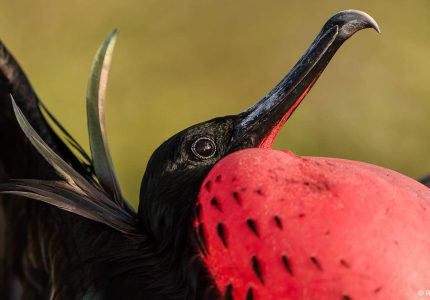 Galapagos Photographic Tours