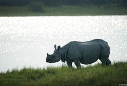 India Kaziranga Photo Tours