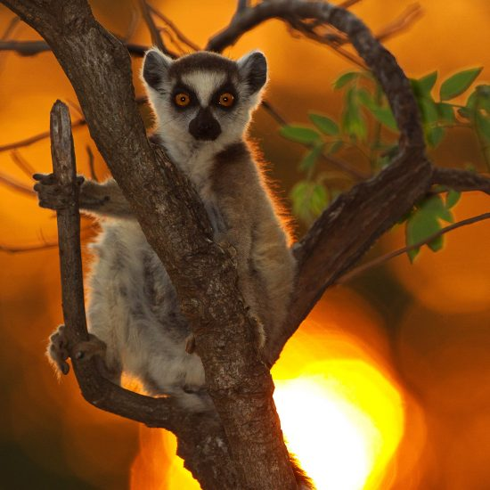 Lemur Photo Tours