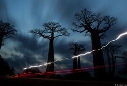 Madagascar Baobabs Photo Tours