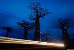 Madagascar Baobabs Photography Tour