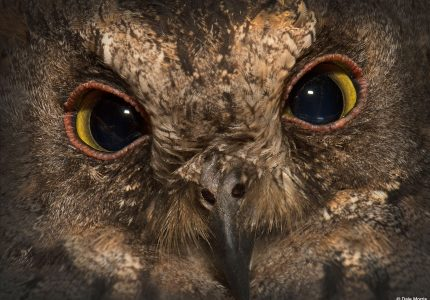 Owl, Madagascar Photography Tours