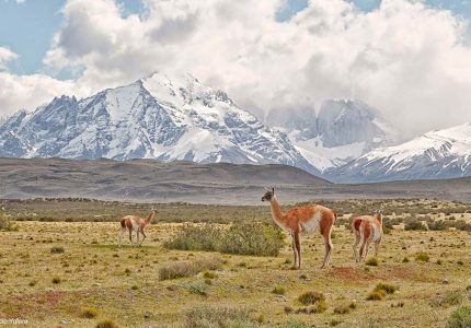 Patagonia Photo Safaris