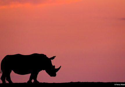 Photo Safaris South Africa
