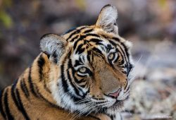 Ranthambore National Park Wildife Tours