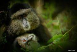 Rwanda Photography Tour