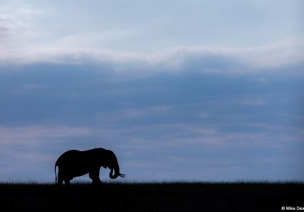 Elephant - Kenya Photography Tours