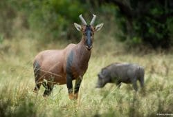Kenya Photo Safari Tours