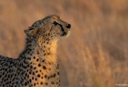Kenya Photo Tours