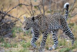 Botswana Custom Photo Tour 1