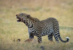Botswana Photo Tours 1