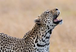 Botswana Photo Tours