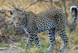 Botswana Photography Tours 3
