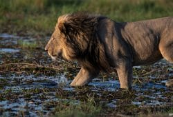Chobe Photo Tours 4