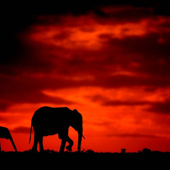 Kenya Photography Tours