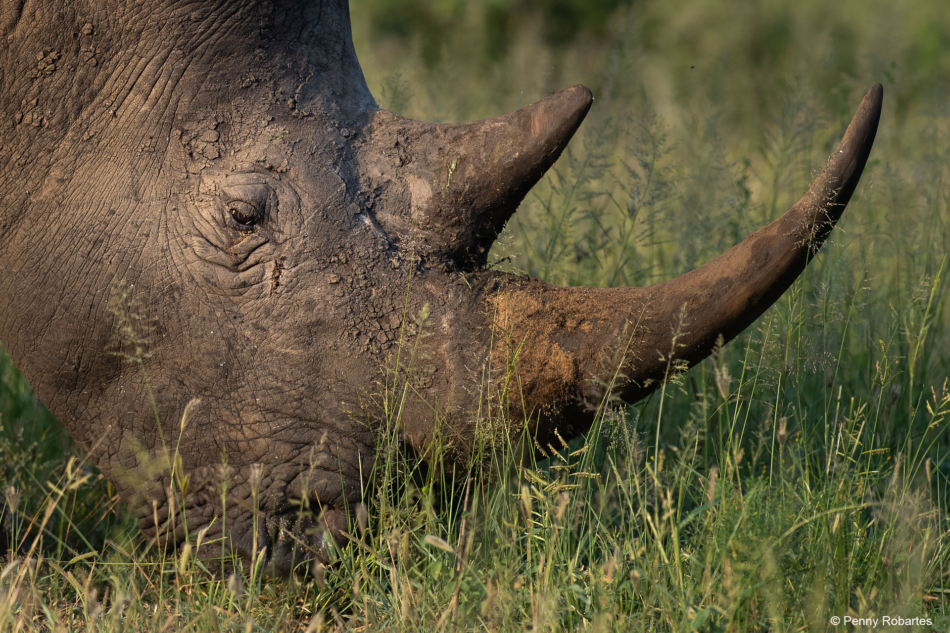 wildlife photography tours south africa
