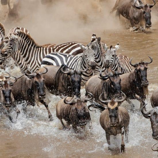 Kenya - Great Migration Photo Tour