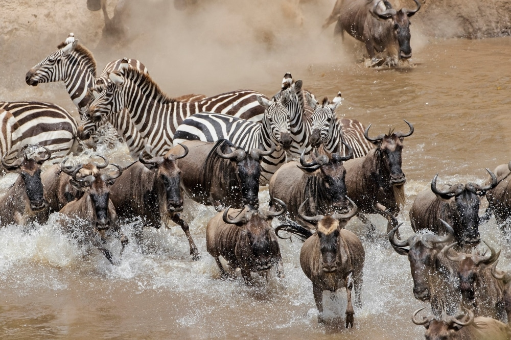 Kenya - Great Migration Photo Tour