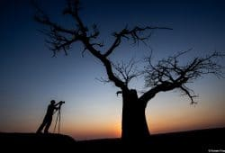 Baobab - Botswana Photography Tour