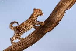 Botswana - Mashatu Photographic Safari