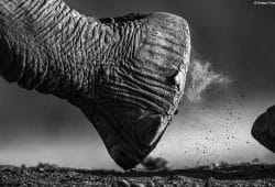 Kirsten Frost Elephant Photography