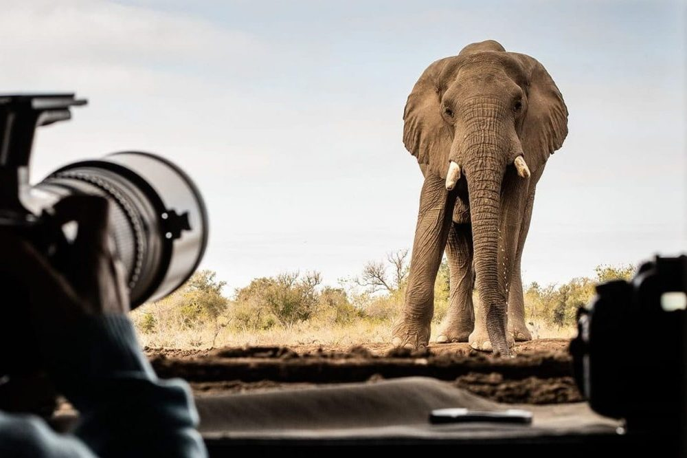 Mashatu - Botswana Photo Tour