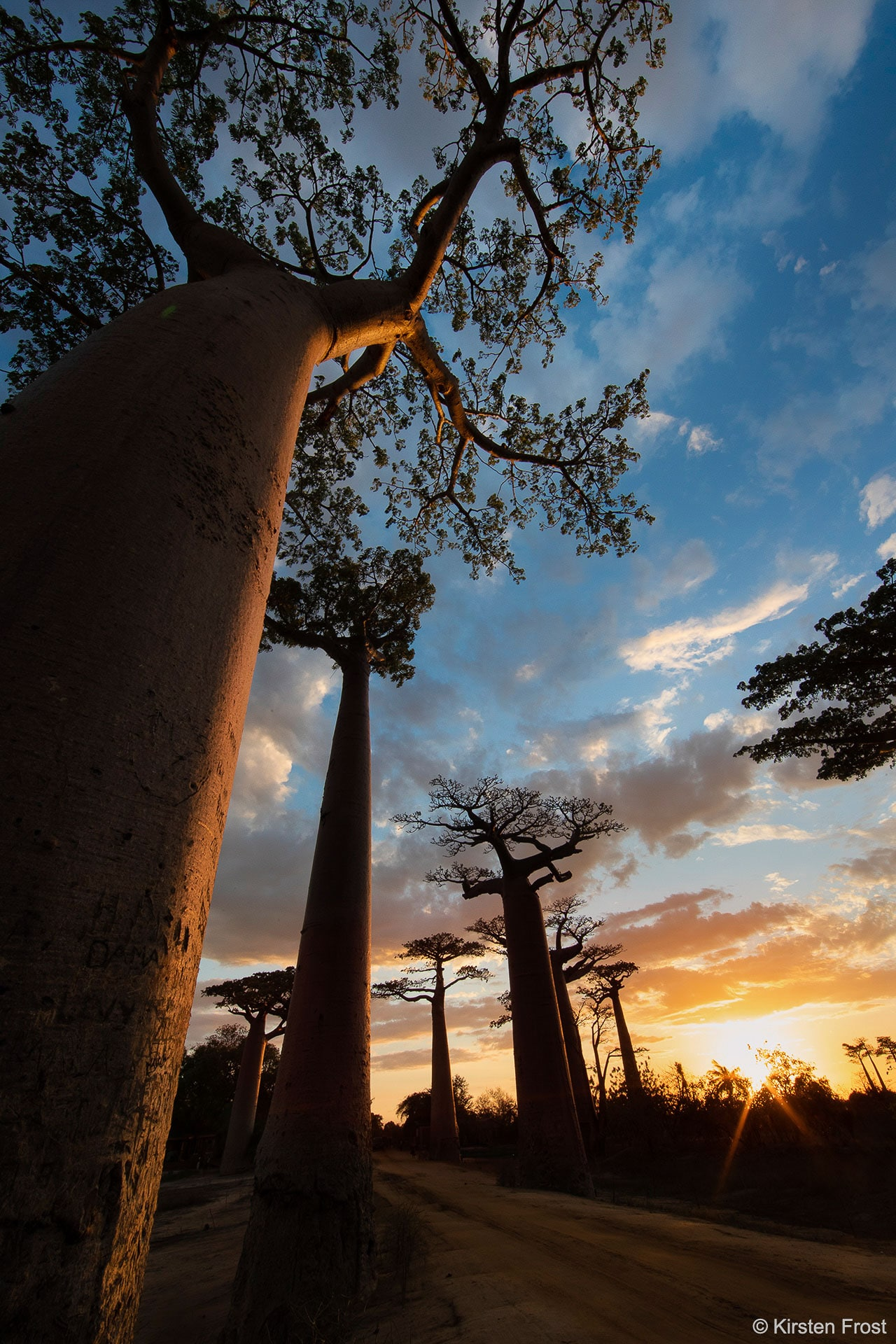 The Avenue of the Baobabs photo tour
