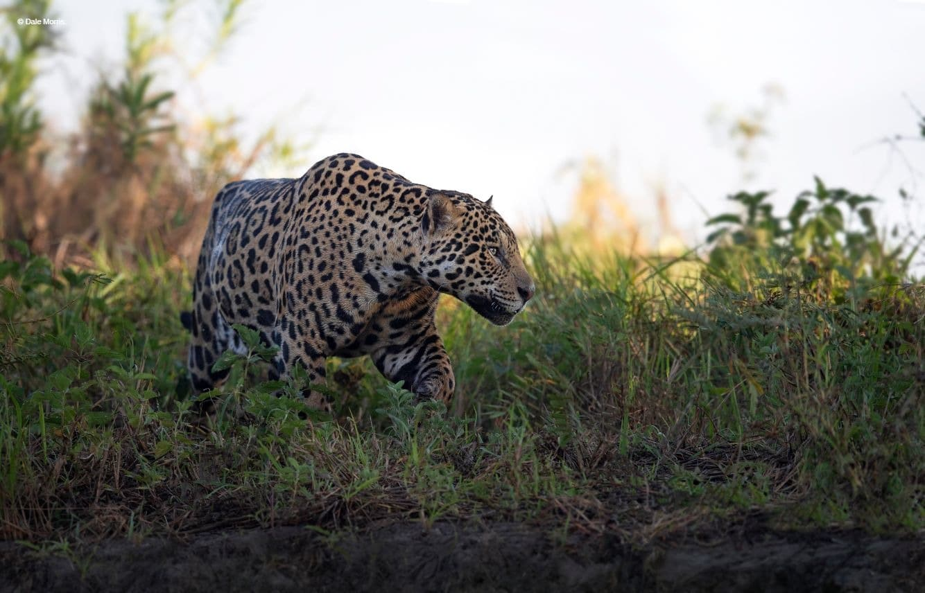 Brazil Pantanal Photography Tour